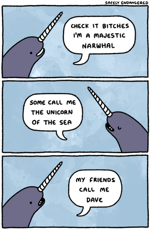 narwhal tastefully offensive